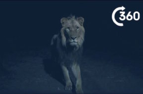 BBC Planet Earth II Night Predators Of Africa 360
