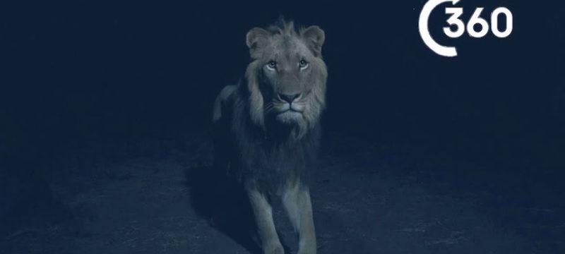 BBC Planet Earth II Night Predators Of Africa 360