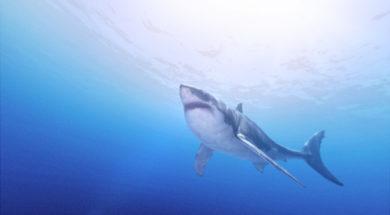 sharkweek operation apex